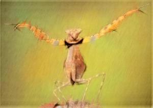 Подражая богомолу, Ван Лан создал стиль танланцюань