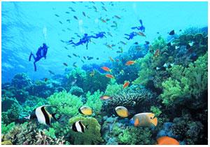 Подводный мир бухты Ялунвань